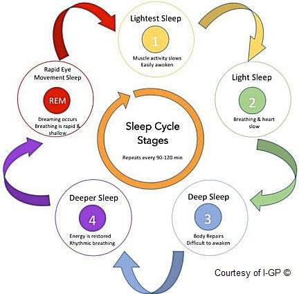 Sleep Cycle Stages